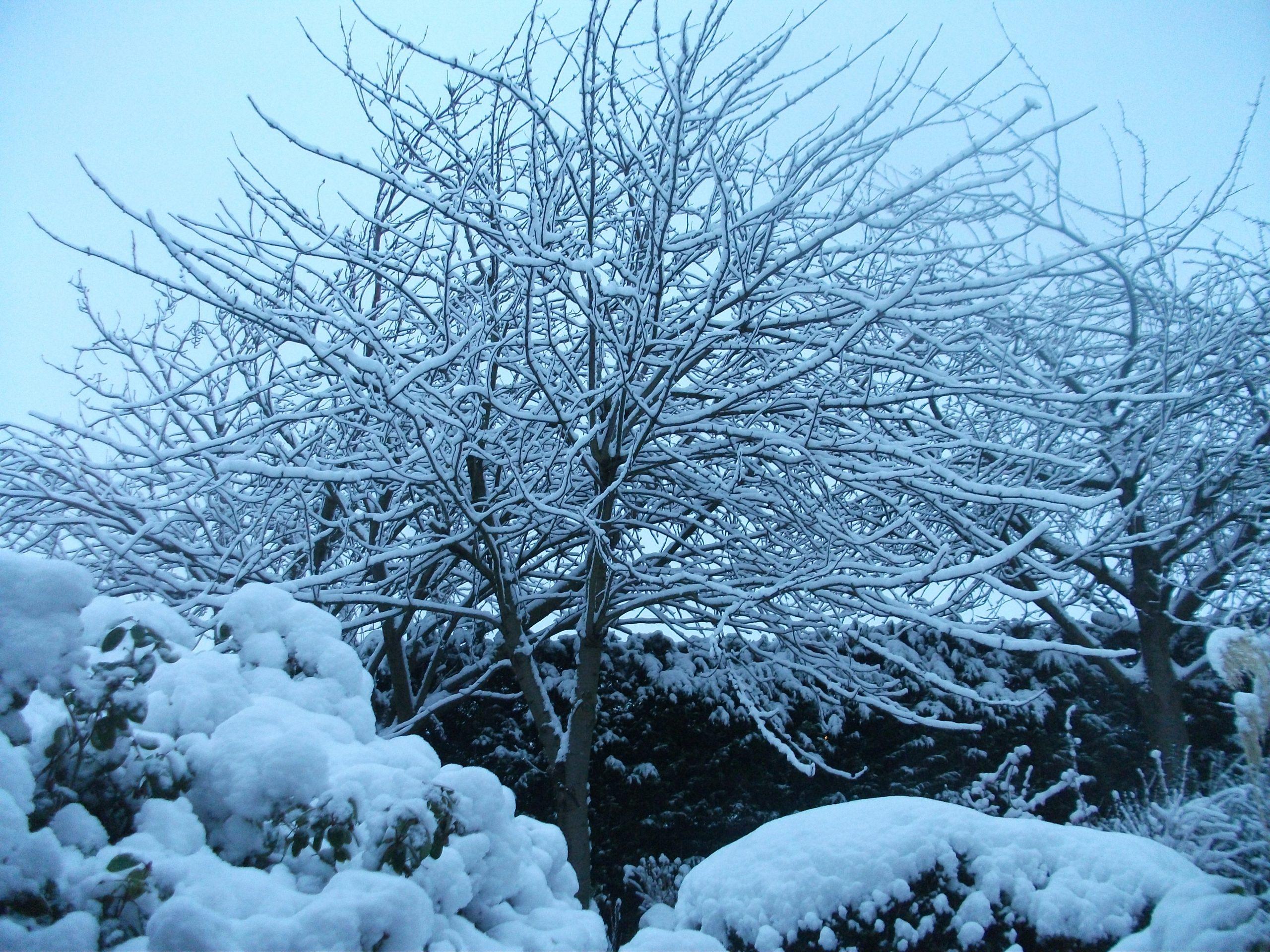 Snowy scene in Clifton