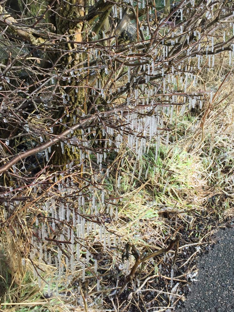 Hedgerow Icicles