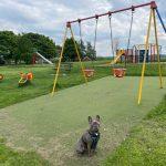 Clifton enjoys on a walk on the park