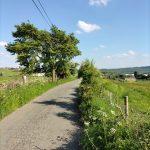 Sunny Thornhills