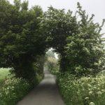 Thornhills Lane - early morning